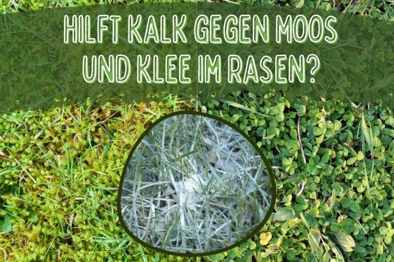 Moos und Klee im Rasen - Titel