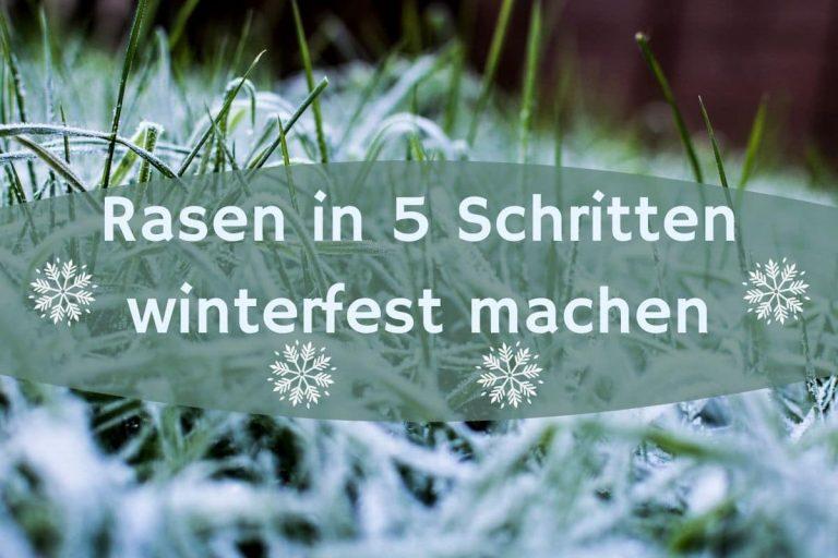 Rasen winterfest - Titel