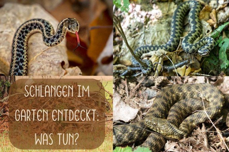 Schlangen im Garten - Titel