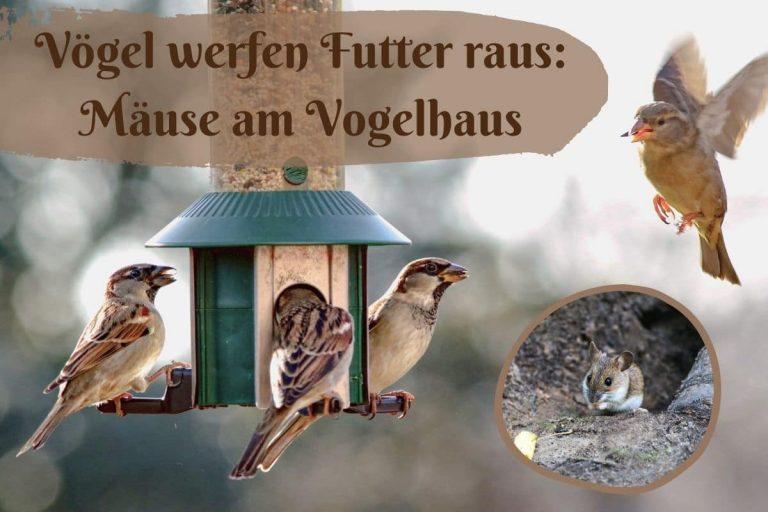 Mäuse am Vogelhaus