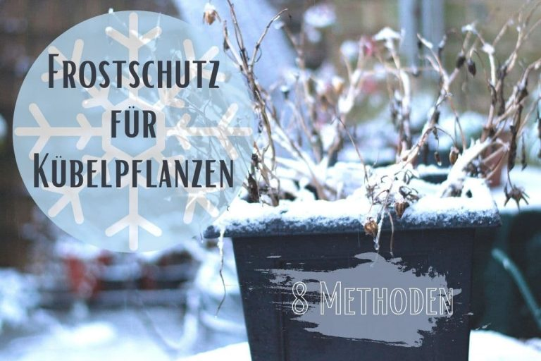 Frostschutz für Kübelpflanzen - Titel