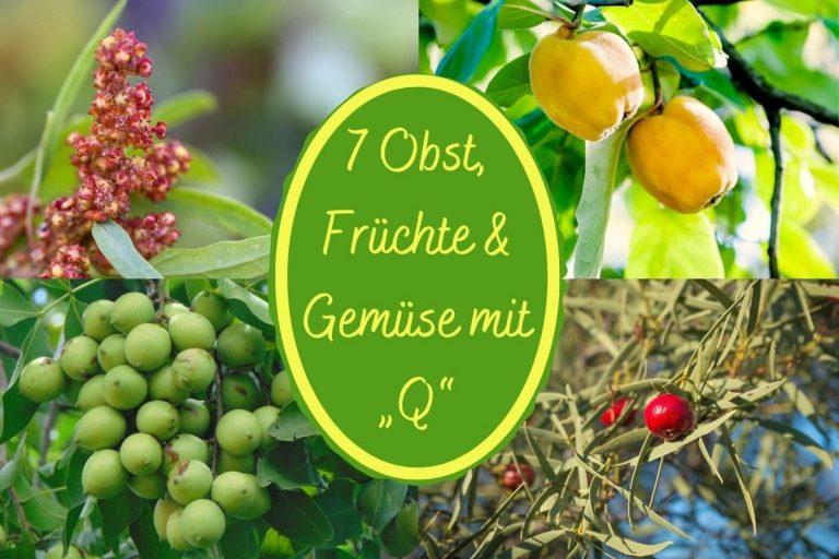 Früchte mit Q - Titel