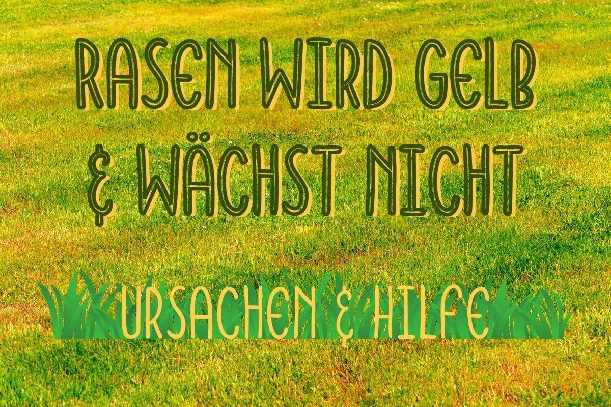 Rasen wird gelb - Titel
