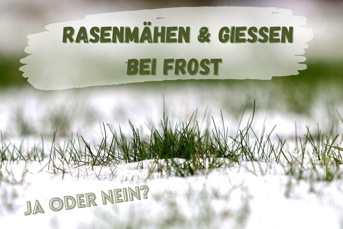 Rasenmähen im Winter - Titel