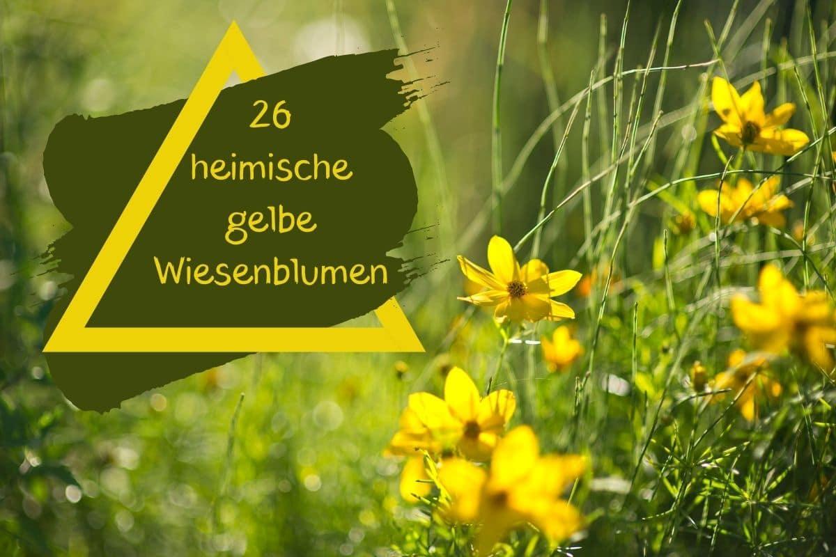 gelbe Wiesenblumen - Titel