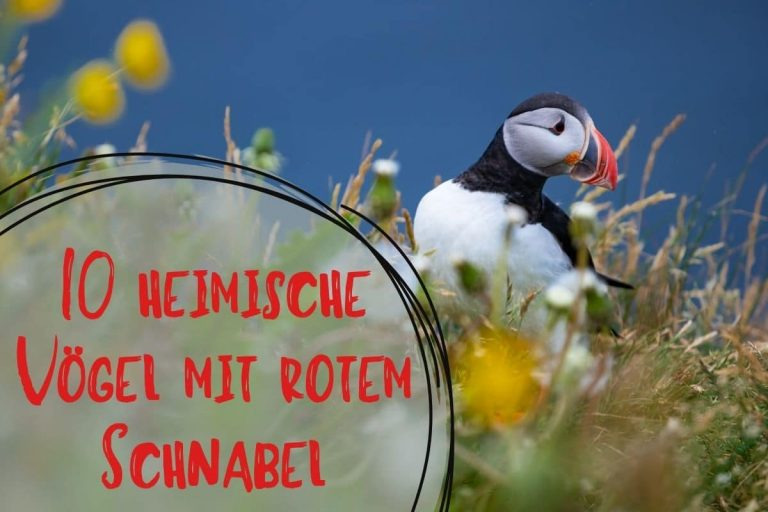 Vögel mit rotem Schnabel - Titel