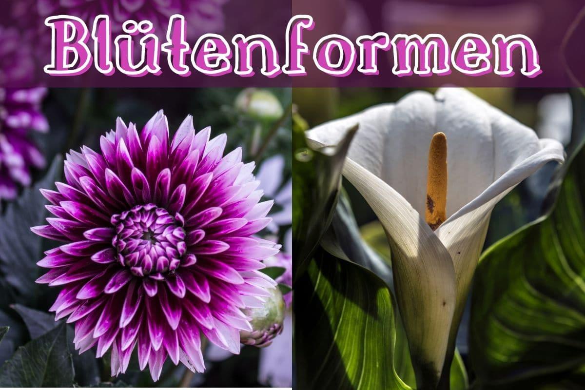 Blütenformen - Titel