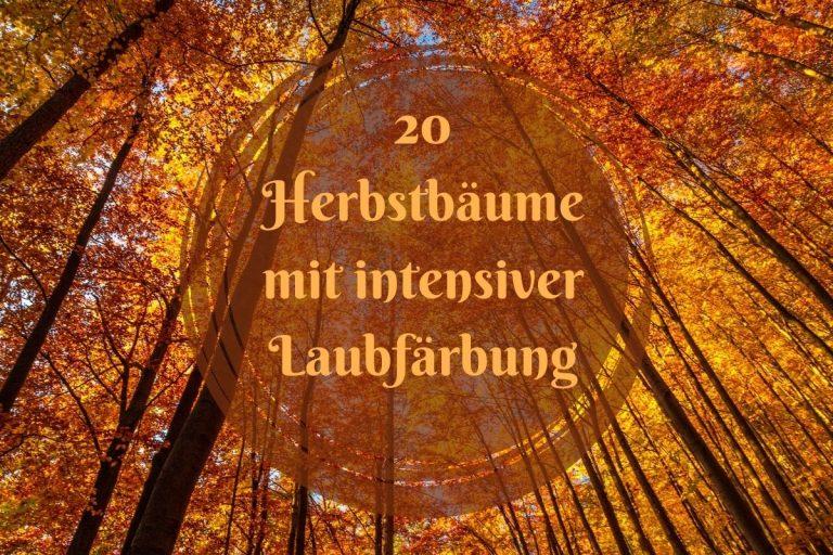 Herbstbäume mit intensiver Laubfärbung - Titel