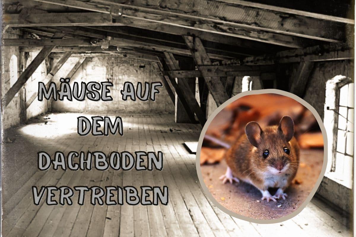 Mäuse auf Dachboden vertreiben - Titel