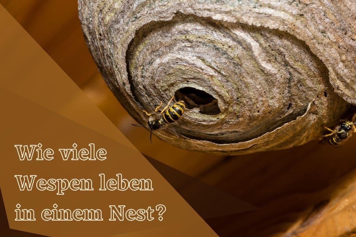 Wie viele Wespen leben in einem Nest - Titel