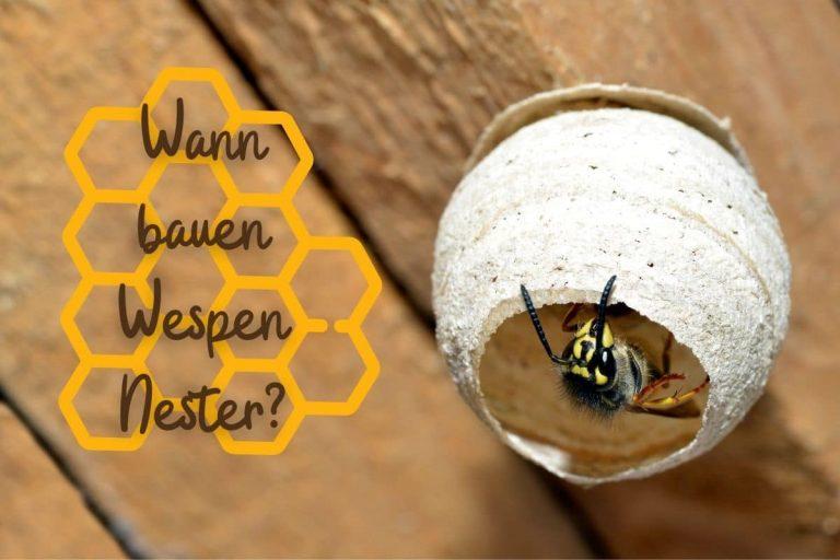 Wann bauen Wespen Nester - Titel