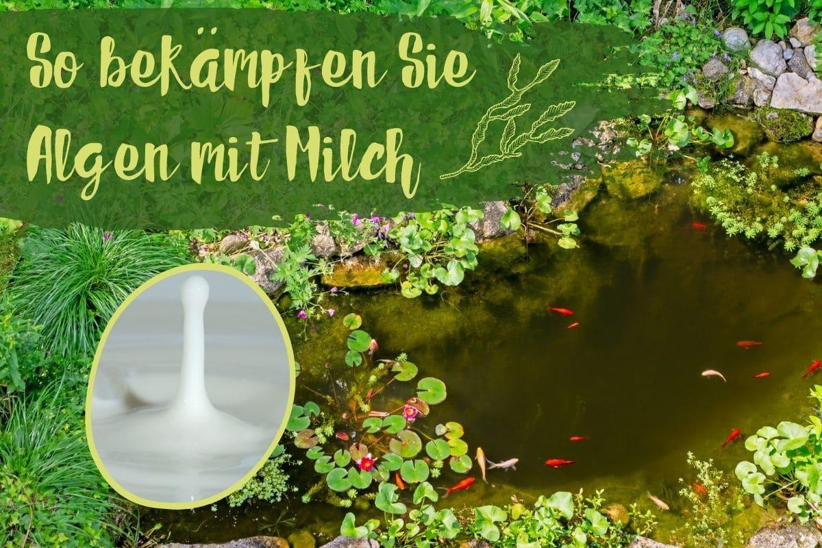Grüner Teich, Algen bekämpfen - Titel