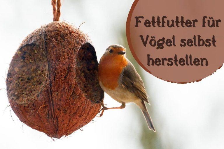 Fettfutter für Vögel - Titel