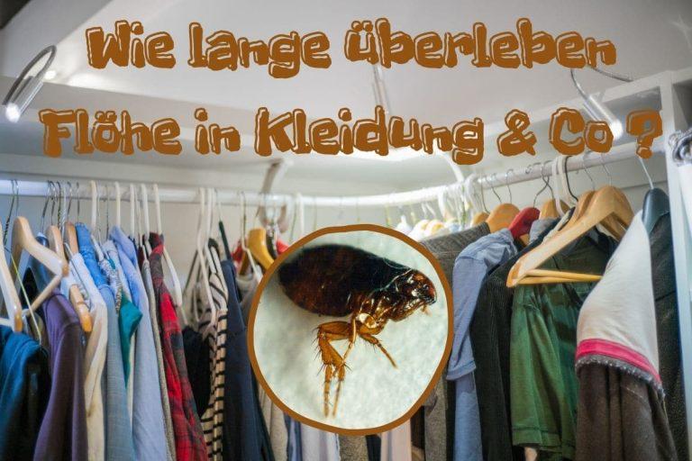 Wie lange überleben Flöhe in Kleidung? - Titel
