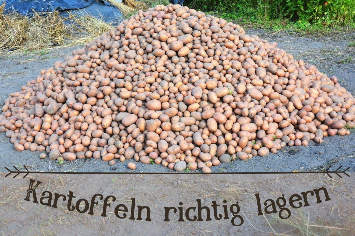 Kartoffeln lagern - Titel