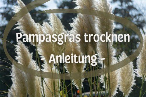 Pampasgras trocknen - Titel