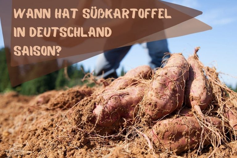 Süßkartoffel Saison - Titel