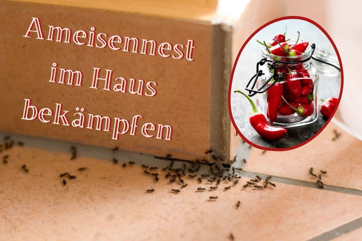 Ameisennest im Haus - Titel