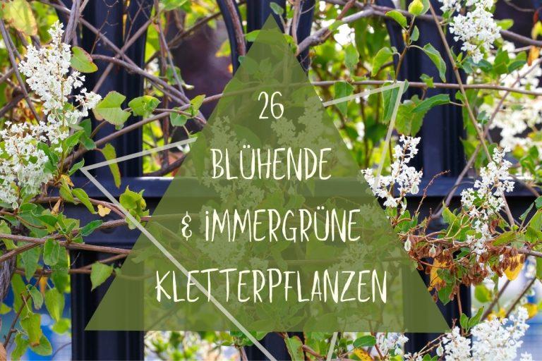 Immergrüne, blühenden Kletterpflanzen - Titel