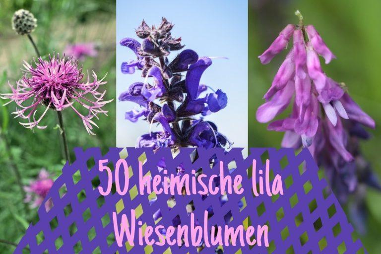 Lila Wiesenblumen - Titel