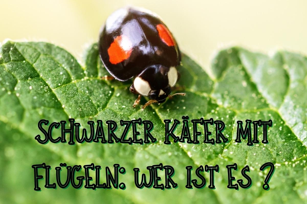 schwarze Käfer mit Flügeln - Titel