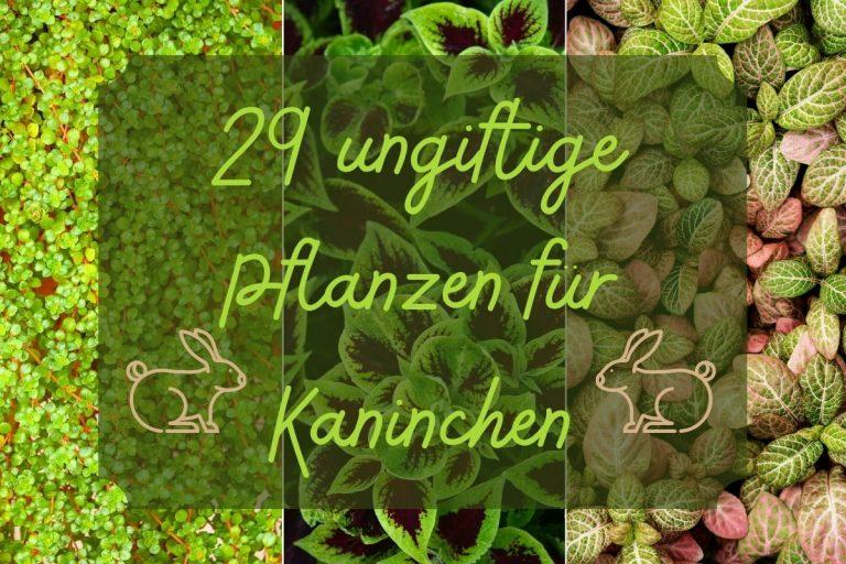 29 ungiftige Pflanzen für Kaninchen
