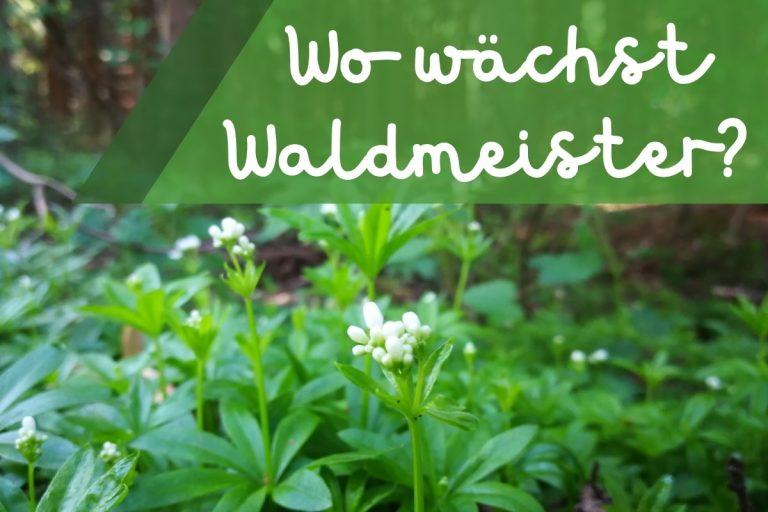 Wo wächst Waldmeister - Titel