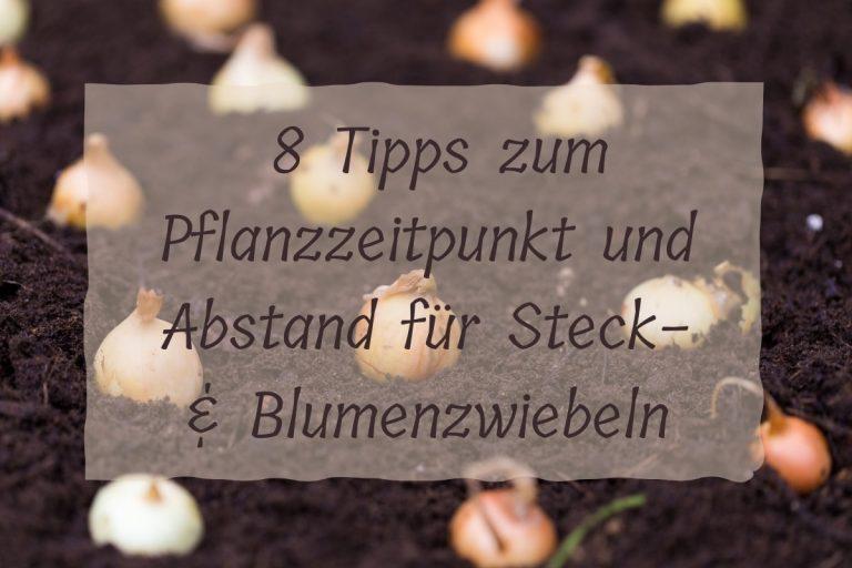 Zwiebeln pflanzen - titel