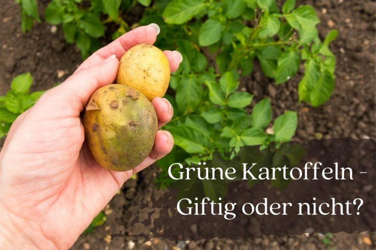 Sind grüne Kartoffeln giftig? - Titel