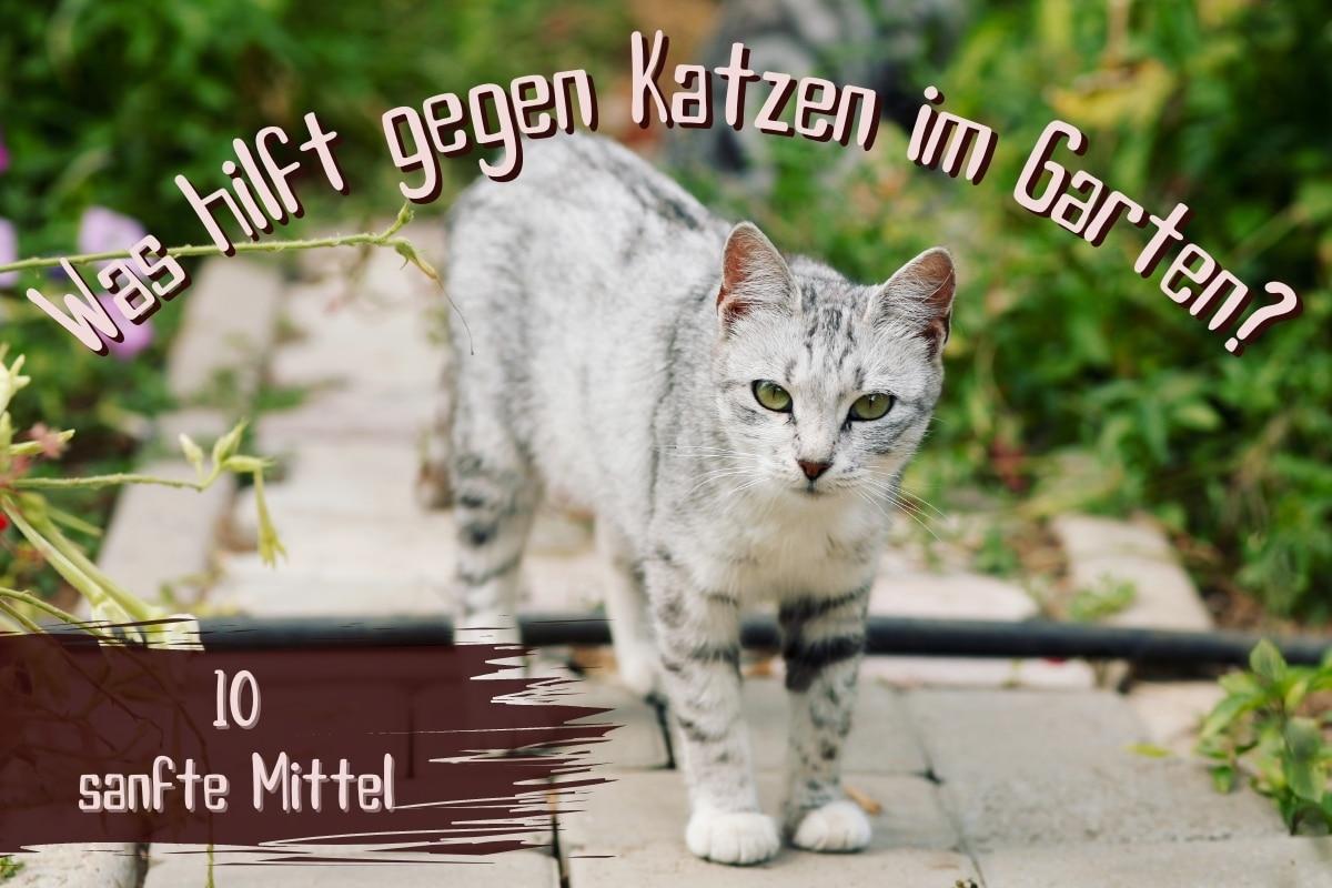 Was tun gegen Katzen im Garten - Titel