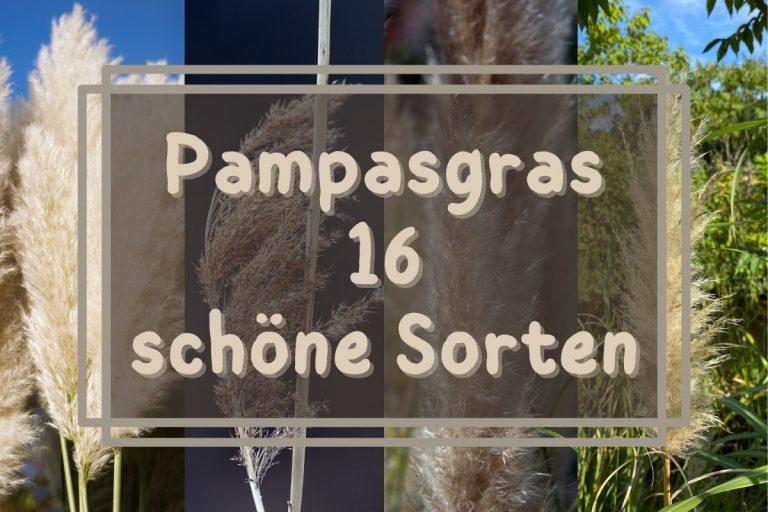 Pampasgras Sorten - Titel
