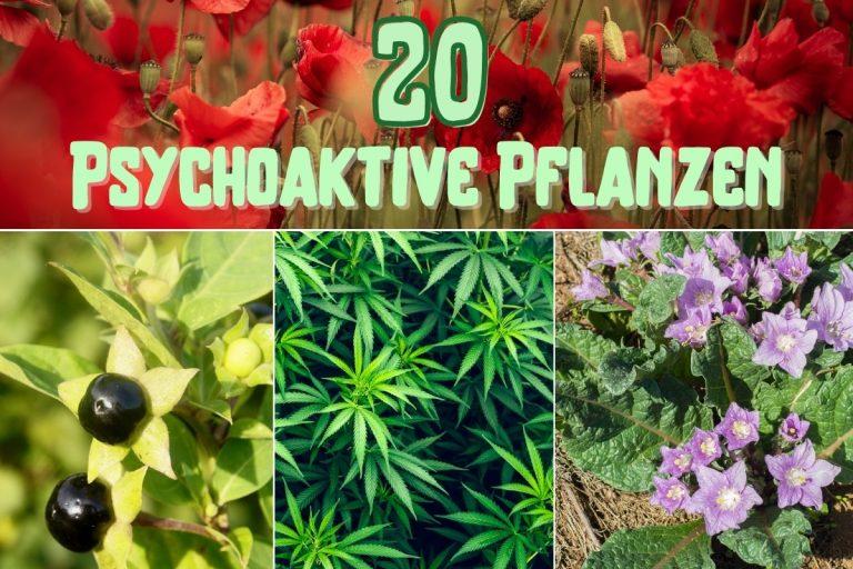 Psychoaktive Pflanzen - Titel