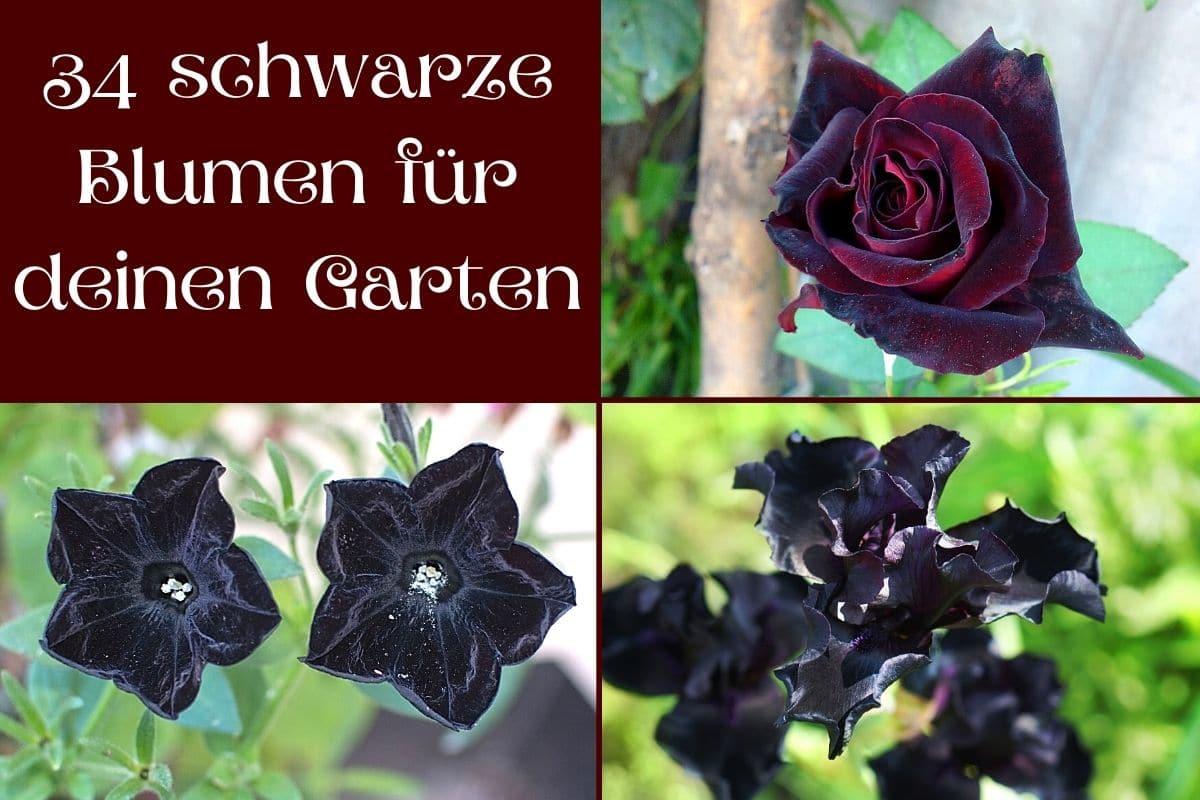 Schwarze Blumen