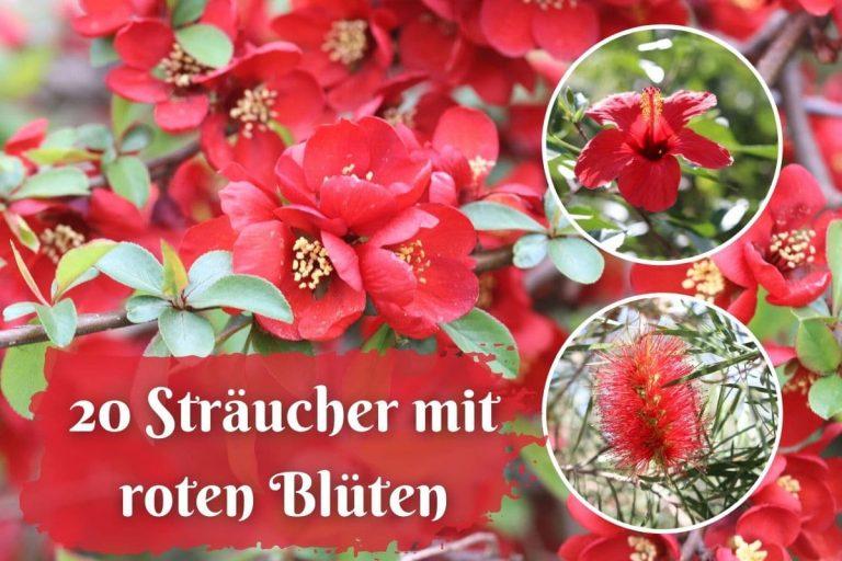 Sträucher mit roten Blüten - Collage