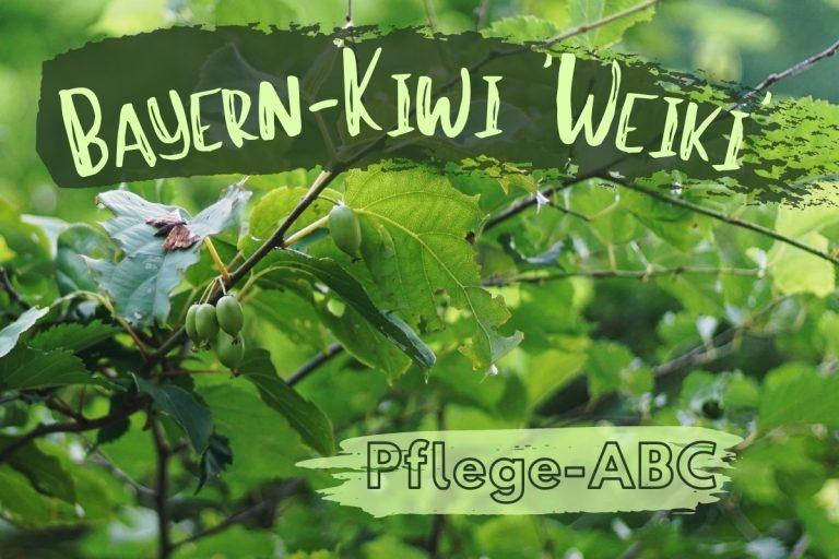 Bayern-Kiwi 'Weiki' - Titel