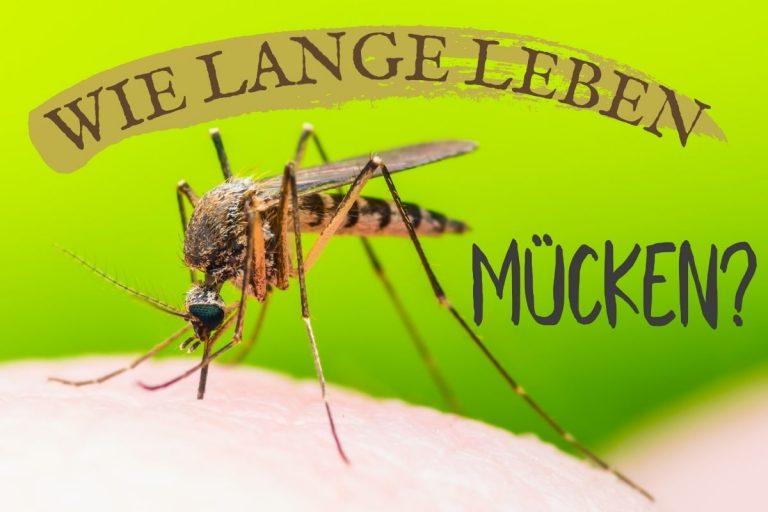Lebensdauer von Mücken - Titel
