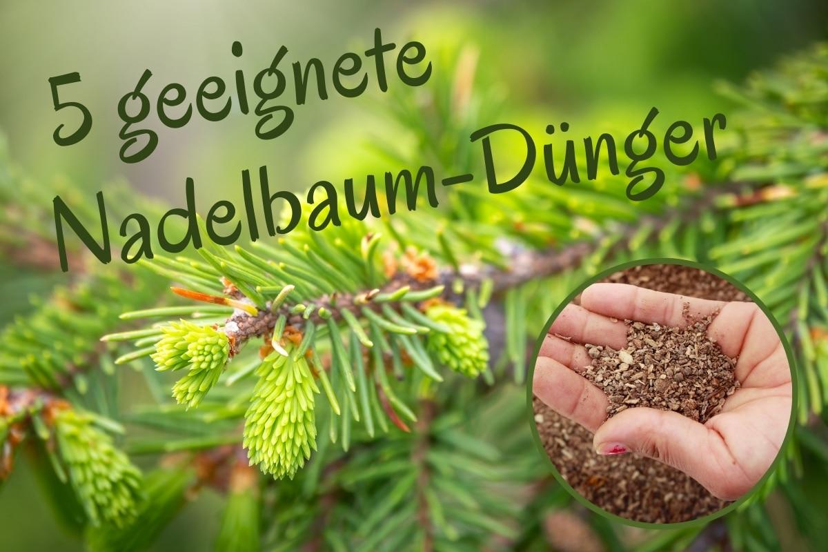 Nadelbaumdünger - Titel