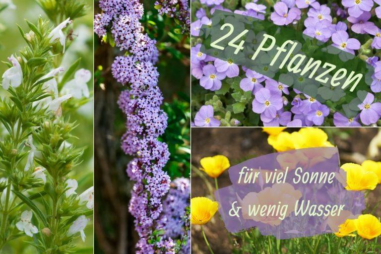 Pflanzen für viele Sonne und wenig Wasser - Titel