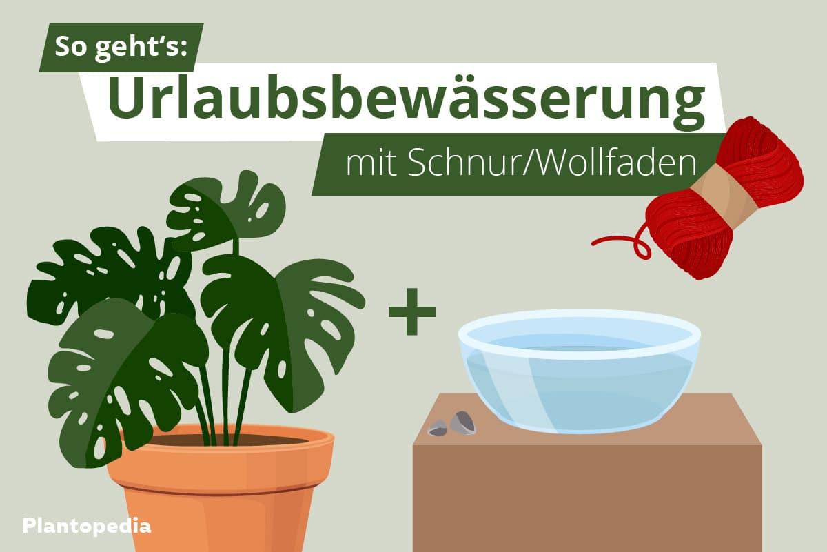 Urlaubsbewässerung - Titel