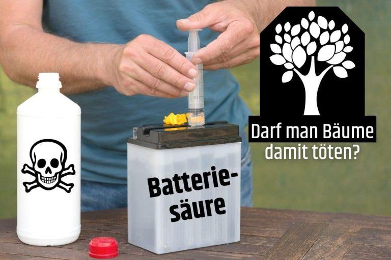 Baum mit Batteriesäure töten