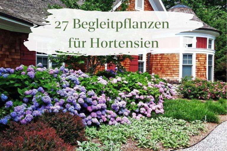 Begleitpflanzen für Hortensien