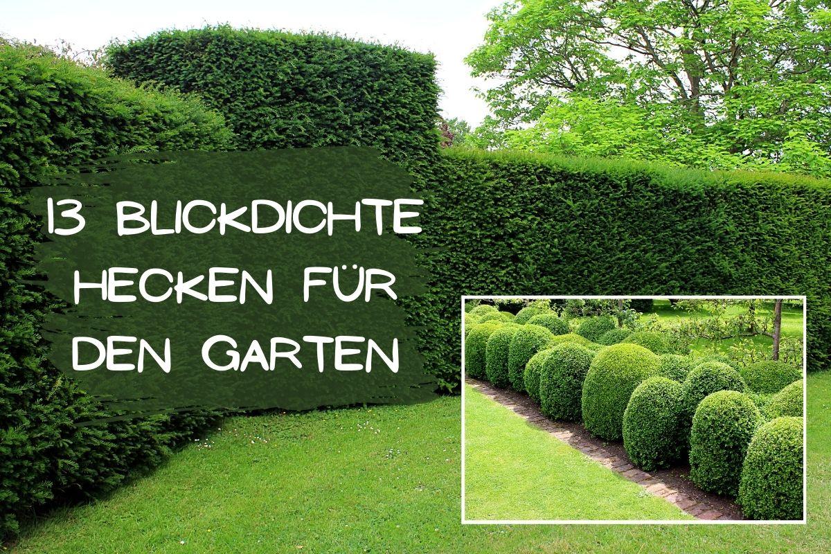 blickdichte Hecken