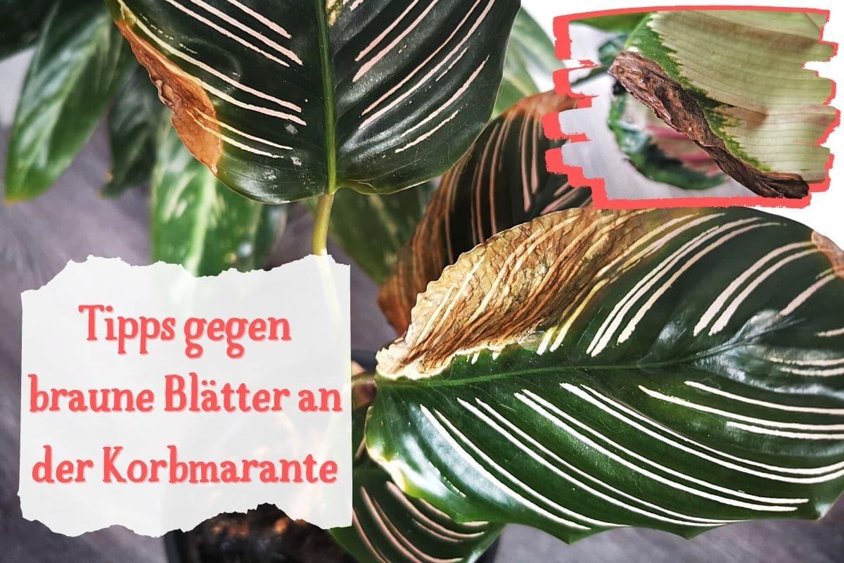 braune Blätter
