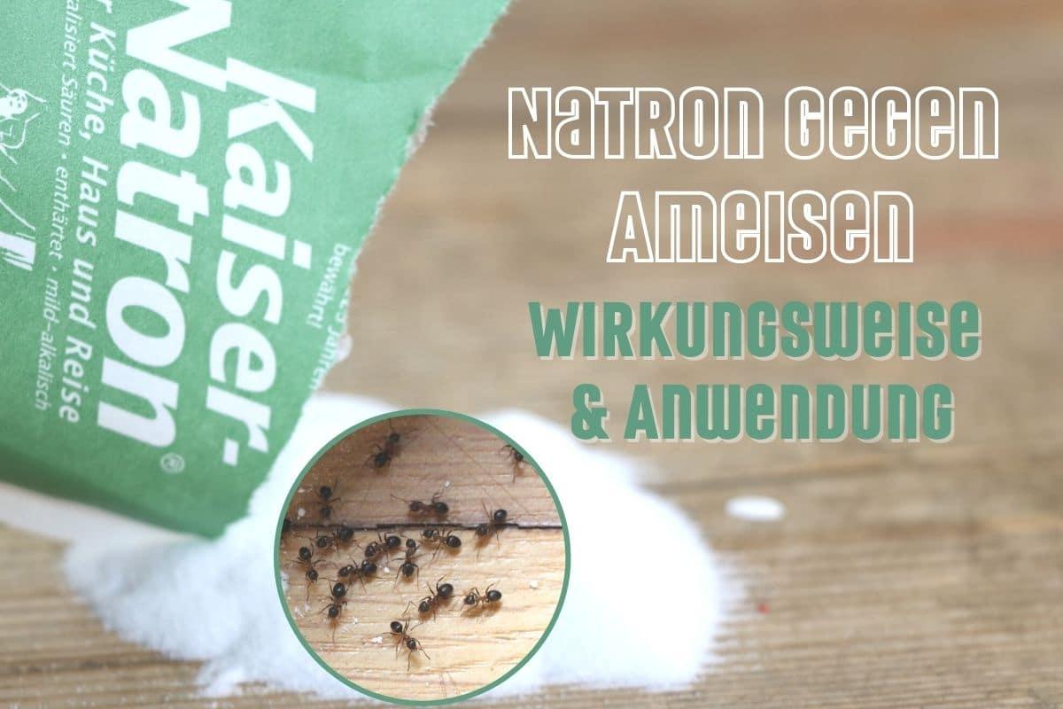 Natron gegen Ameisen