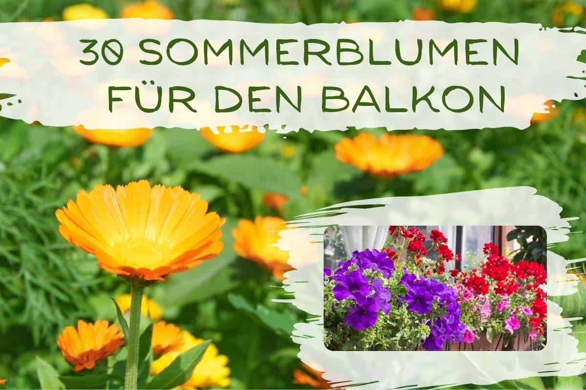 Sommerblumen Balkon