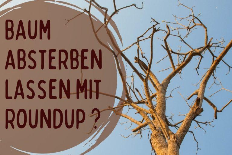 Baum absterben lassen mit Roundup - Titel