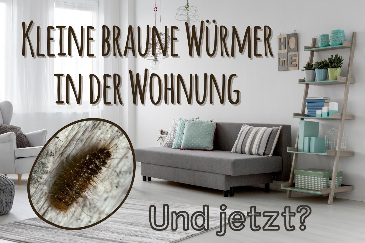 Braune Käfer in der Wohnung - Titel