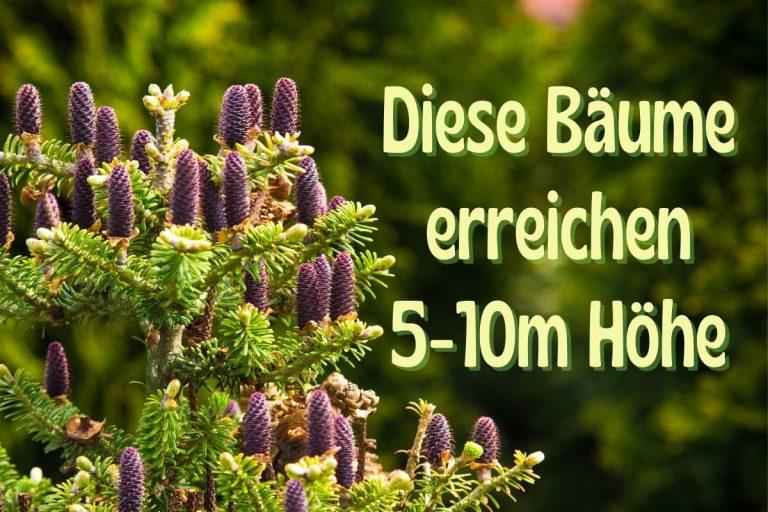 Garten-Bäume mit 5-10 Metern Höhe - Titel