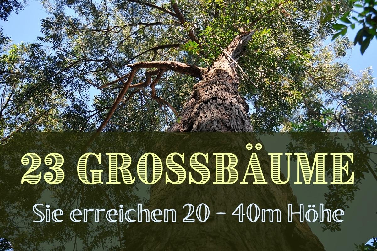 große Gartenbäume - Titel