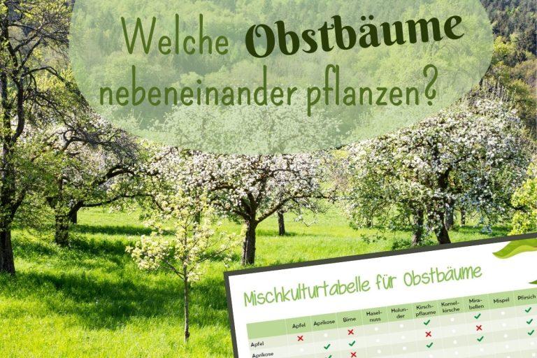 Mischkulturtabelle Obstbäume - Titel